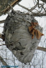 Hill-Stead's Nature Blog