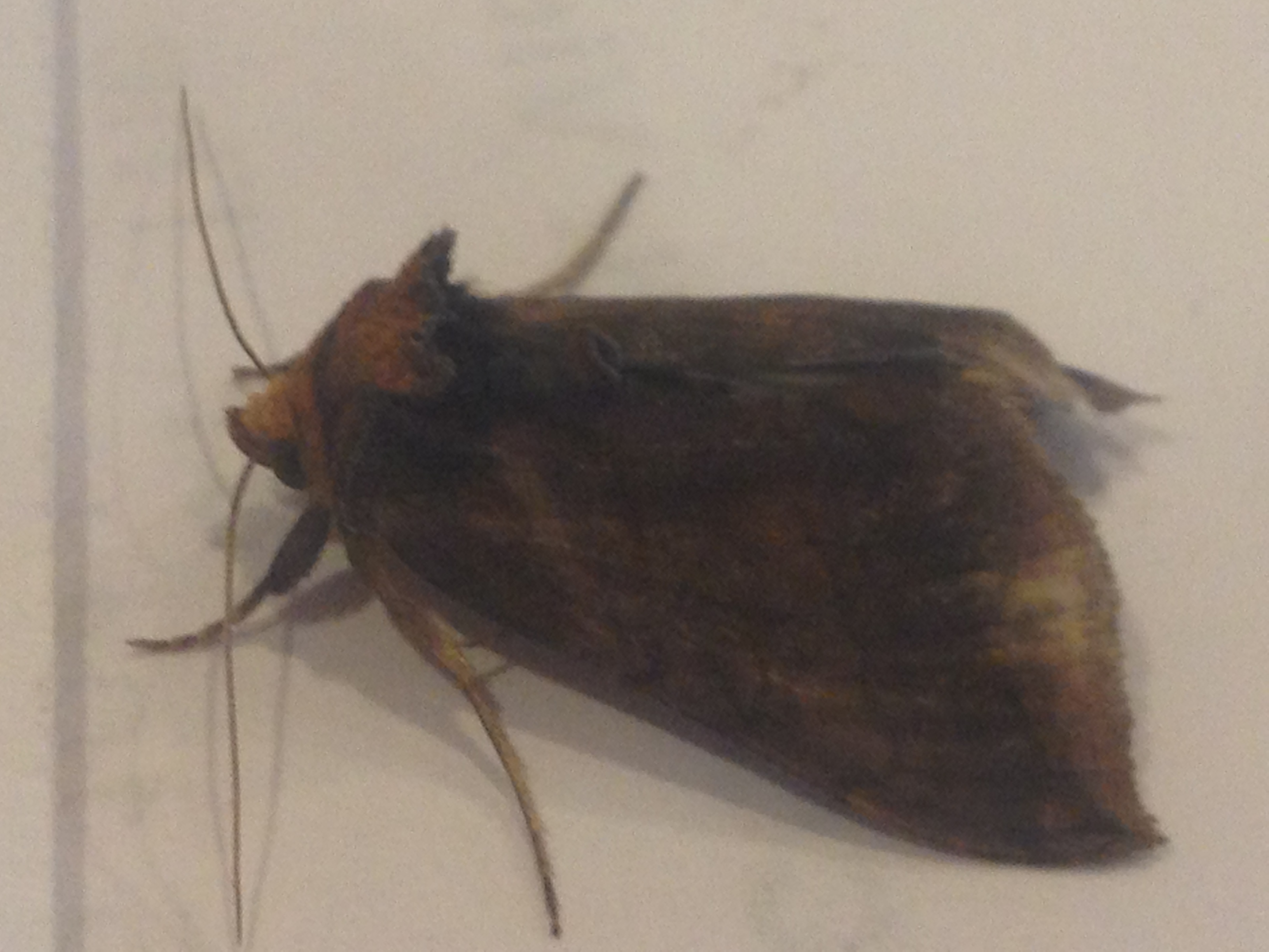 Small Moths In Bedroom Pantry Moths In Bedroom Interior Design Decor